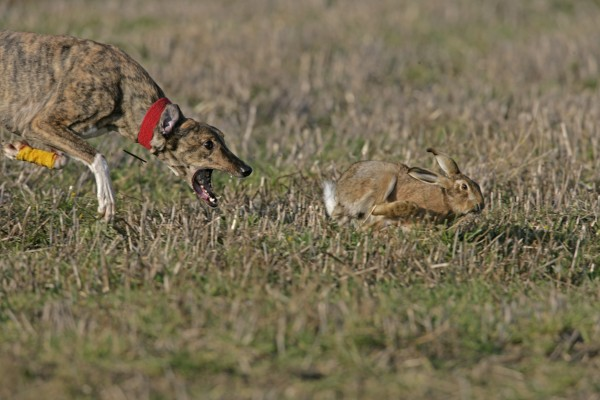 Basics Of Rabbit Hunting
