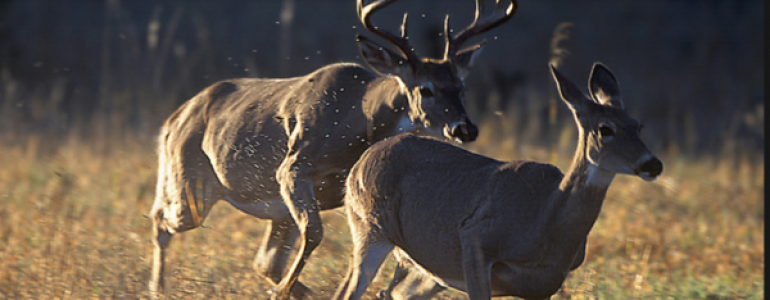 Common Mistakes To Avoid While Hunting