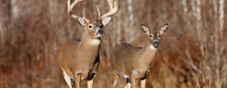 Different Reasons For Deer Hunting