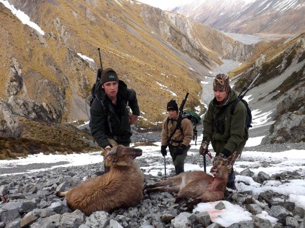 Tahr Hunting In New Zealand