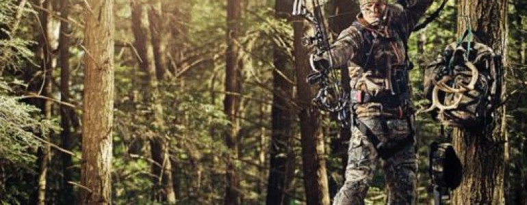 The Pleasure Of Hunting In Pine Thickets